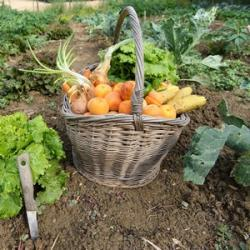 A la Cueillette de Mes Fruits et Légumes