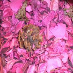 Quel est le Parfum Idéal pour les Poissons ?