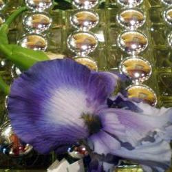 Parfum Voluptueux, un Vrai Plaisir pour les Sens